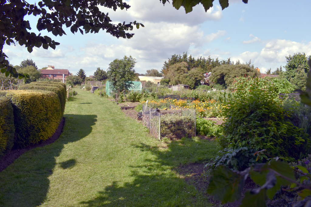 Picture of the City Council allotments - Whyke Road