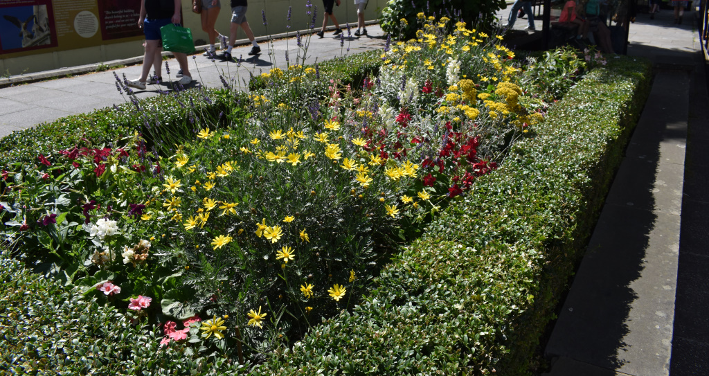 Cathedral beds - wildflower planting - summer 2021