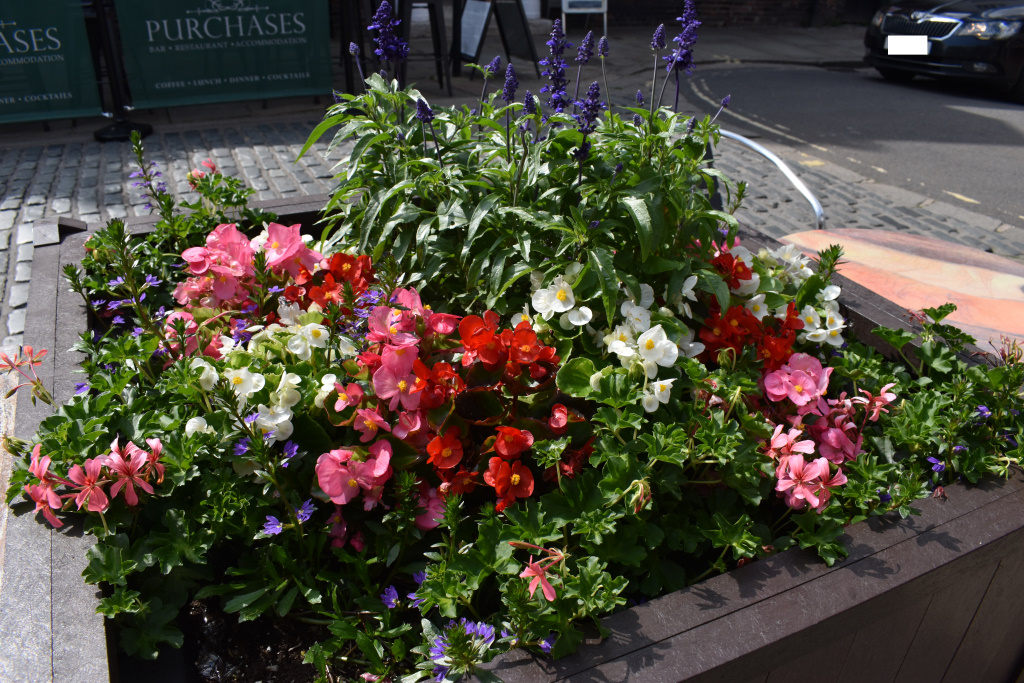 City Floral - planter - North Street - Old Cross