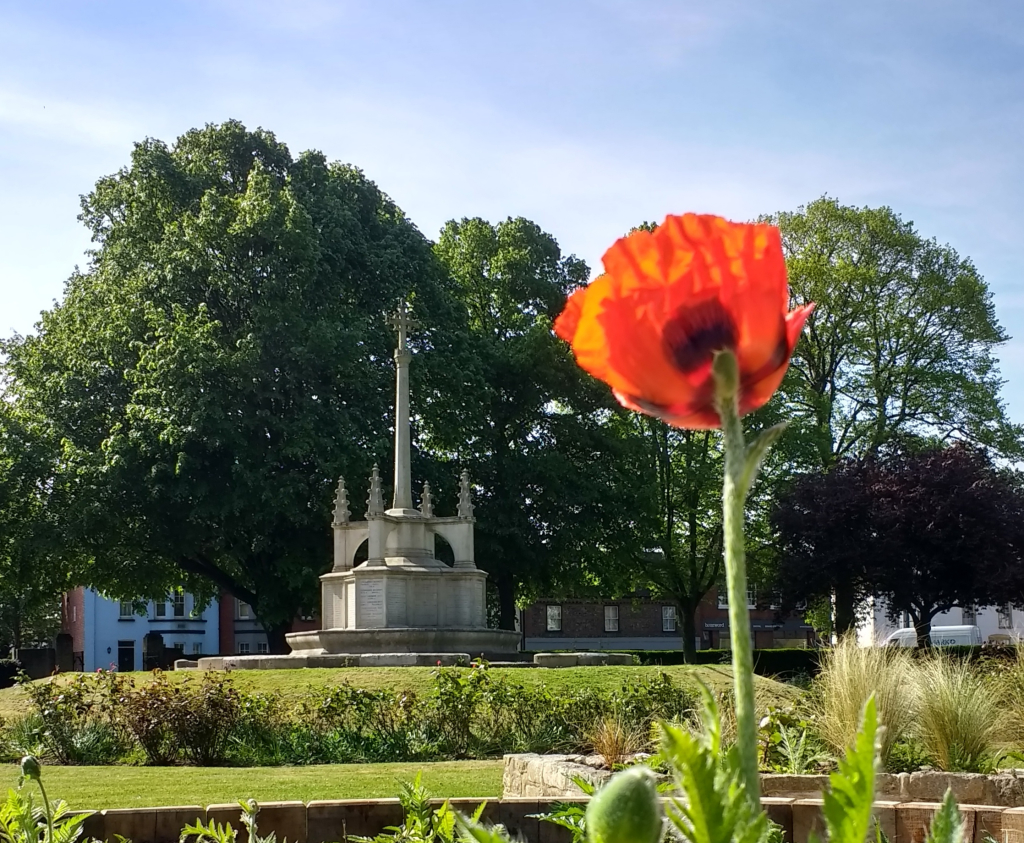 View of the War Memorial, Litten Gardens, with a flowering poppy in the foreground